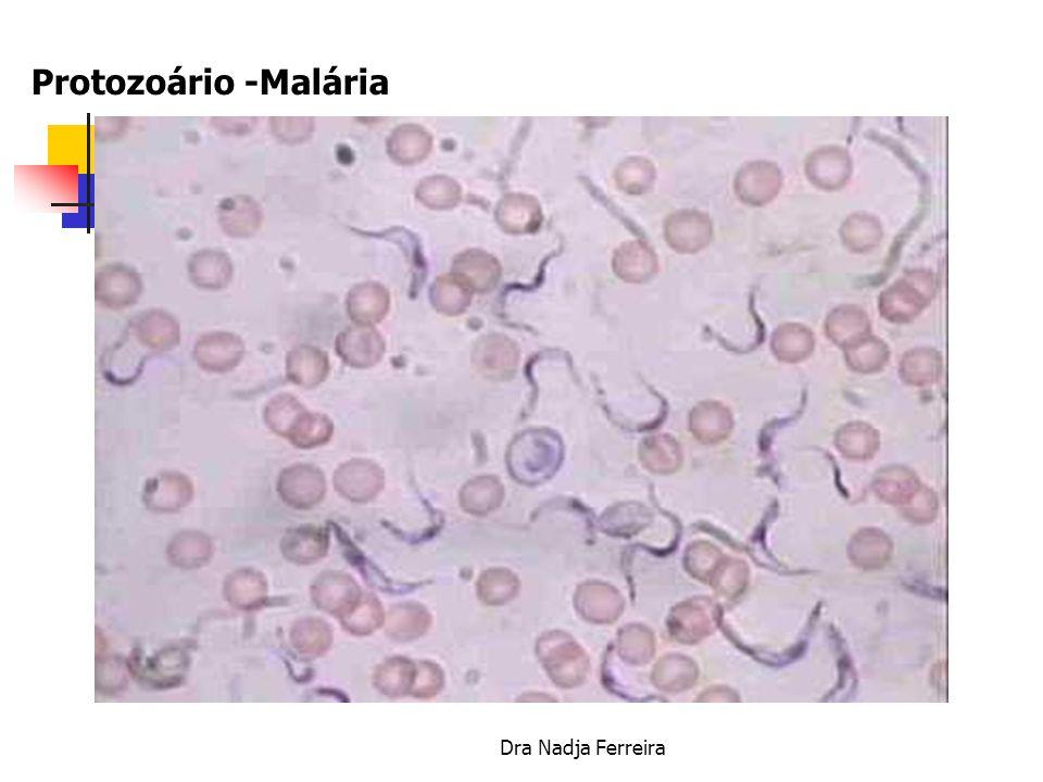 Dra Nadja Ferreira Protozoário -Malária Plasmodium vivax e falciparum Vetor Anopheles