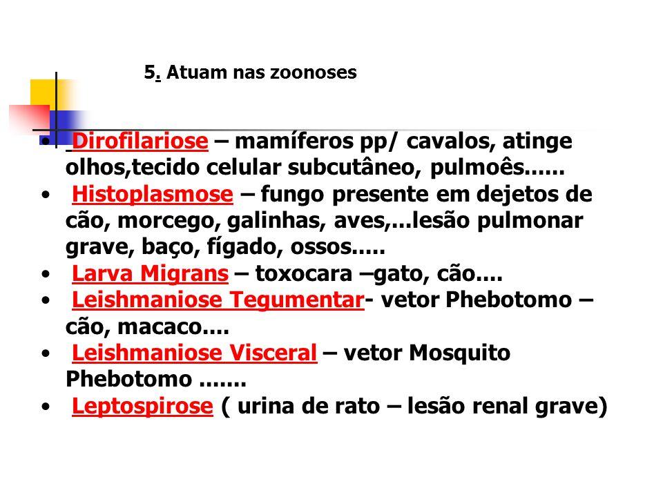 5. Atuam nas zoonoses Brucelose Humana (leite ou contato direto dos animais –bovinos, caprinos e suinos)Brucelose Humana Doença de Chagas - Tripanosom