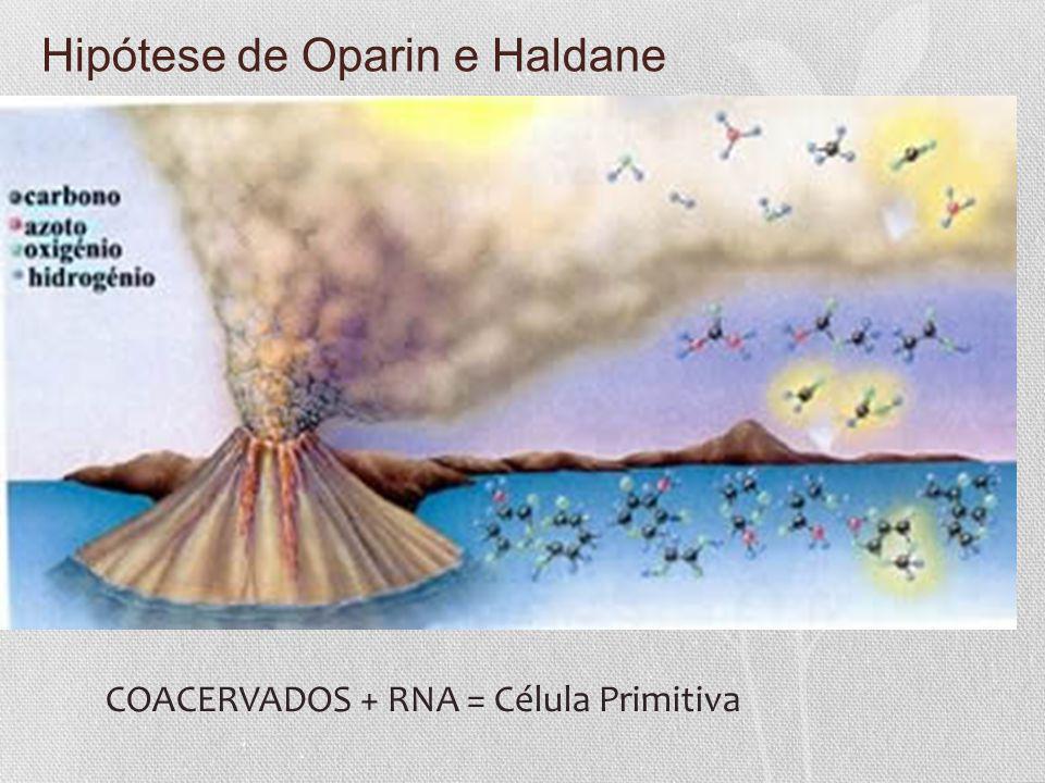 Hipótese de Oparin e Haldane COACERVADOS + RNA = Célula Primitiva