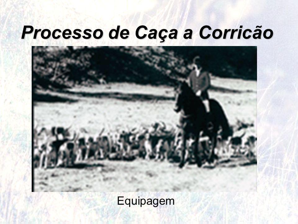 Processo de Caça a Corricão Equipagem