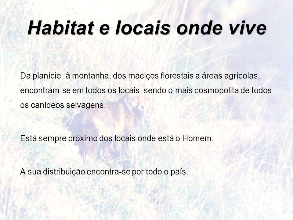 Habitat e locais onde vive Da planície à montanha, dos maciços florestais a áreas agrícolas, encontram-se em todos os locais, sendo o mais cosmopolita