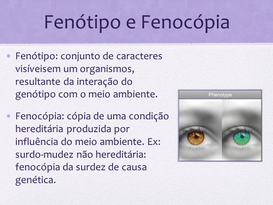 Fenótipo e Fenocópia Fenótipo: conjunto de caracteres visíveisem um organismos, resultante da interação do genótipo com o meio ambiente. Fenocópia: có