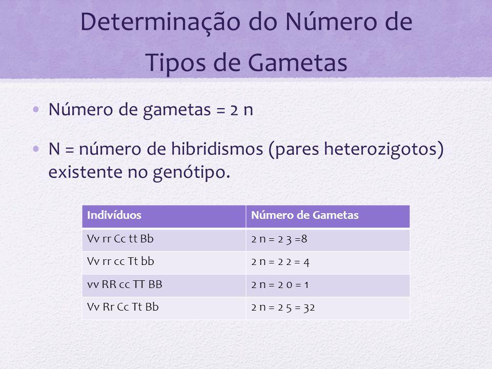Determinação do Número de Tipos de Gametas Número de gametas = 2 n N = número de hibridismos (pares heterozigotos) existente no genótipo. IndivíduosNú
