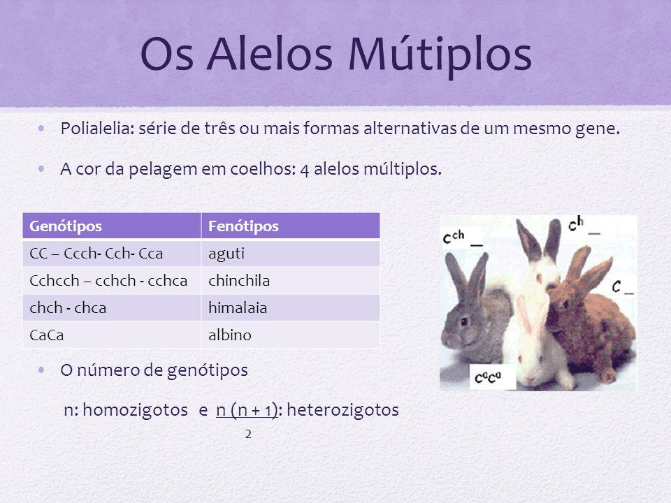 Os Alelos Mútiplos Polialelia: série de três ou mais formas alternativas de um mesmo gene. A cor da pelagem em coelhos: 4 alelos múltiplos. O número d