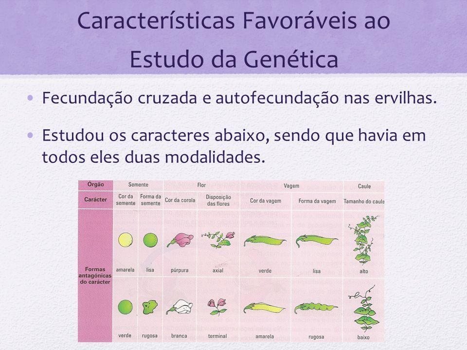 Características Favoráveis ao Estudo da Genética Fecundação cruzada e autofecundação nas ervilhas. Estudou os caracteres abaixo, sendo que havia em to