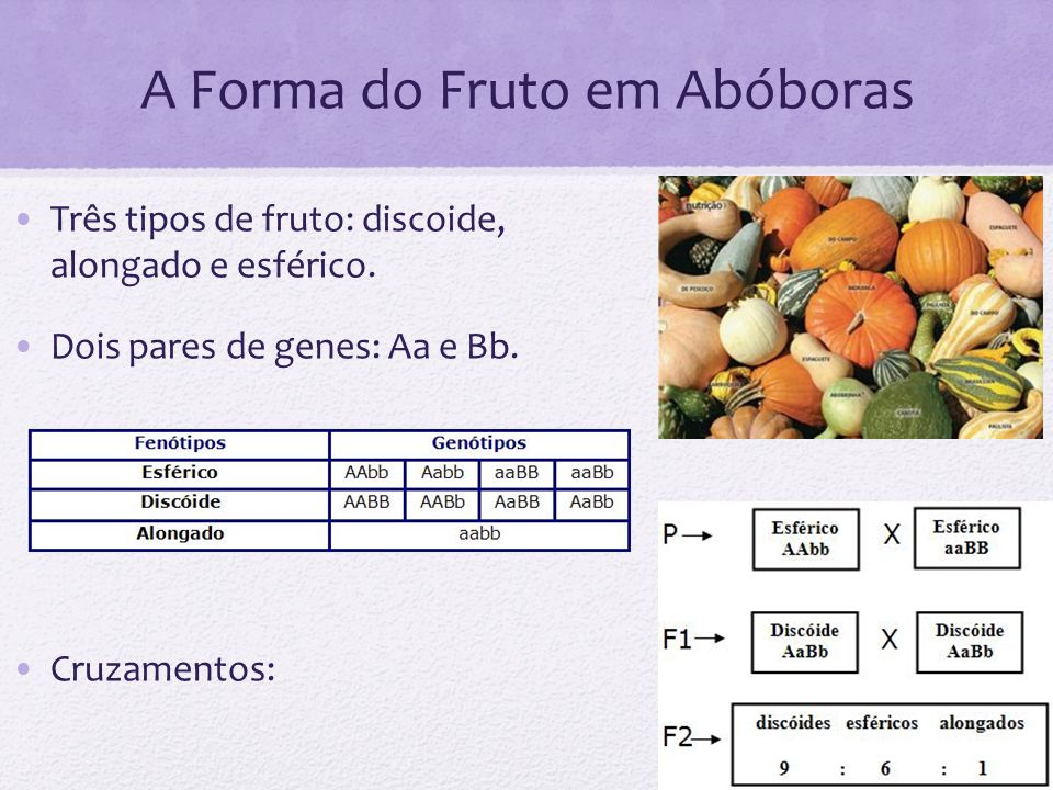 A Forma do Fruto em Abóboras Três tipos de fruto: discoide, alongado e esférico. Dois pares de genes: Aa e Bb. Cruzamentos: