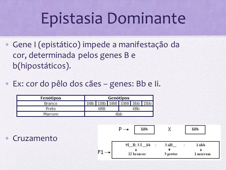 Epistasia Dominante Gene I (epistático) impede a manifestação da cor, determinada pelos genes B e b(hipostáticos). Ex: cor do pêlo dos cães – genes: B