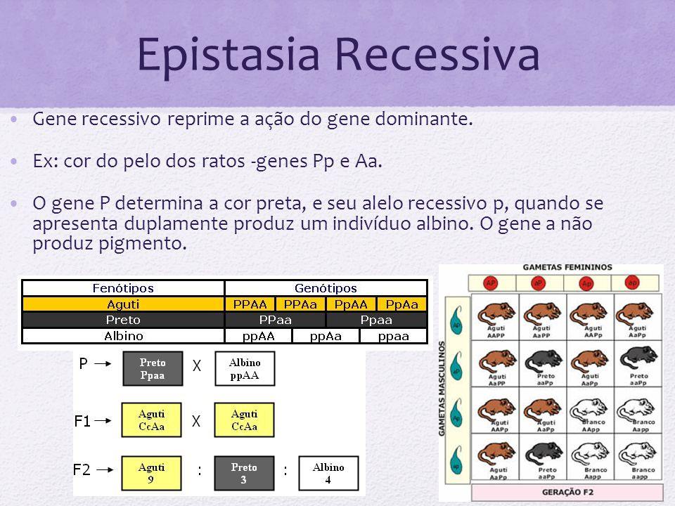 Epistasia Recessiva Gene recessivo reprime a ação do gene dominante. Ex: cor do pelo dos ratos -genes Pp e Aa. O gene P determina a cor preta, e seu a