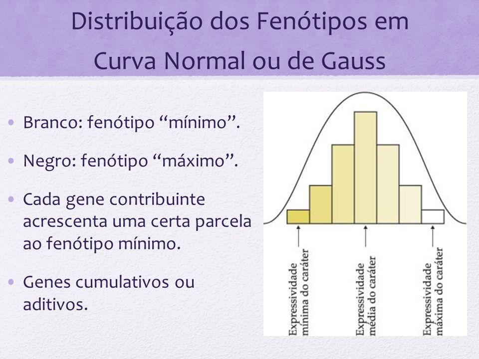 Distribuição dos Fenótipos em Curva Normal ou de Gauss Branco: fenótipo mínimo. Negro: fenótipo máximo. Cada gene contribuinte acrescenta uma certa pa