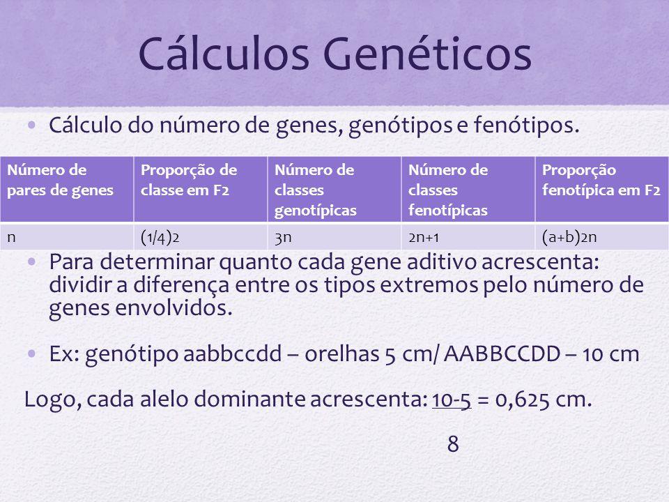 Cálculos Genéticos Cálculo do número de genes, genótipos e fenótipos. Para determinar quanto cada gene aditivo acrescenta: dividir a diferença entre o