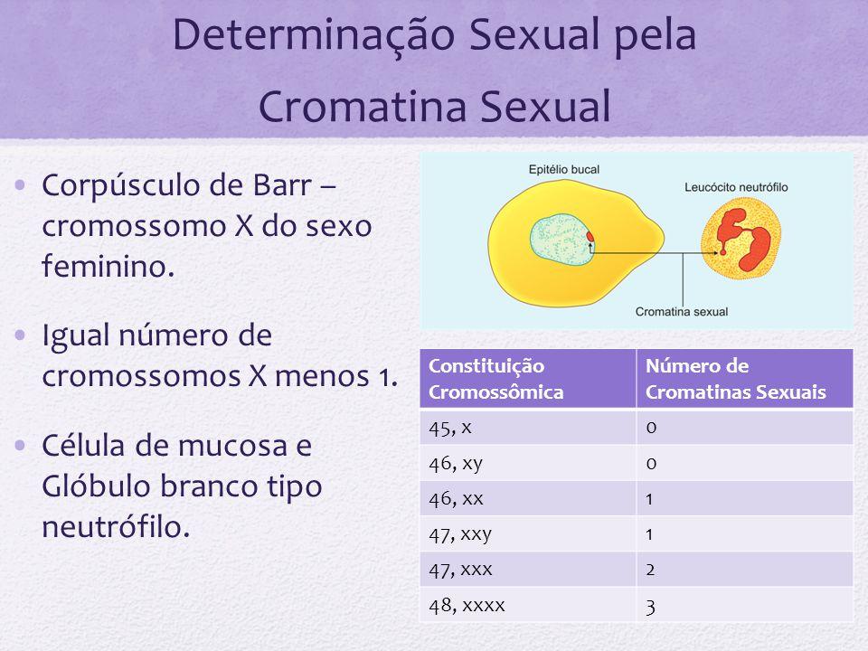 Determinação Sexual pela Cromatina Sexual Corpúsculo de Barr – cromossomo X do sexo feminino. Igual número de cromossomos X menos 1. Célula de mucosa