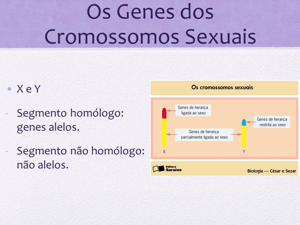 Os Genes dos Cromossomos Sexuais X e Y -Segmento homólogo: genes alelos. -Segmento não homólogo: não alelos.
