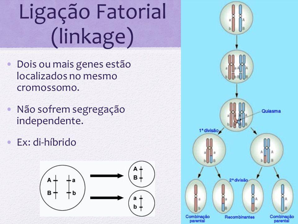 Ligação Fatorial (linkage) Dois ou mais genes estão localizados no mesmo cromossomo. Não sofrem segregação independente. Ex: di-híbrido