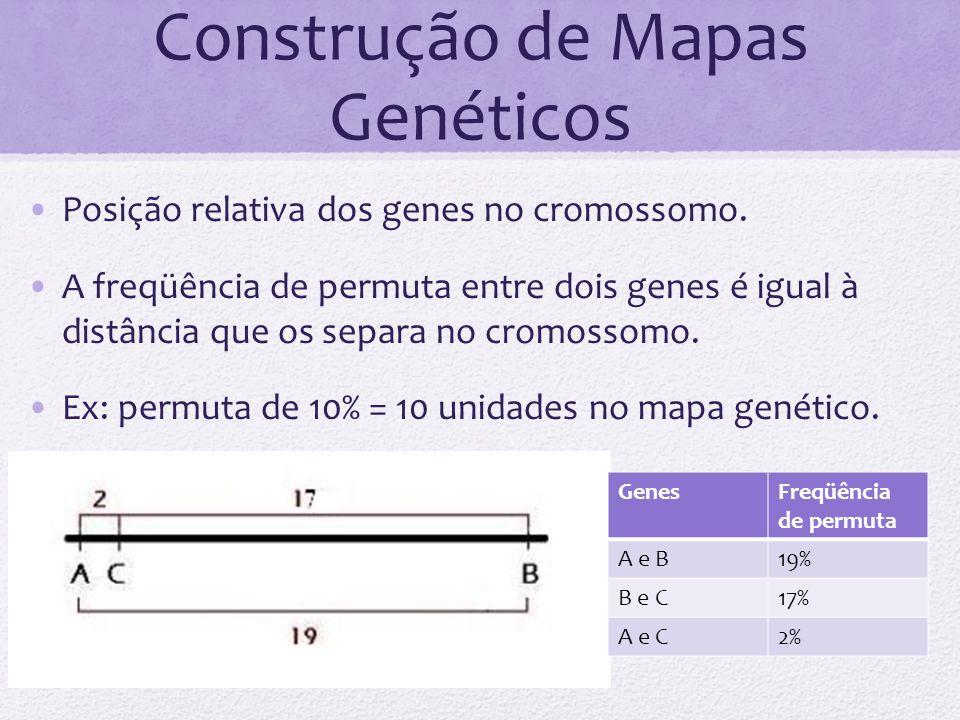 Construção de Mapas Genéticos Posição relativa dos genes no cromossomo. A freqüência de permuta entre dois genes é igual à distância que os separa no