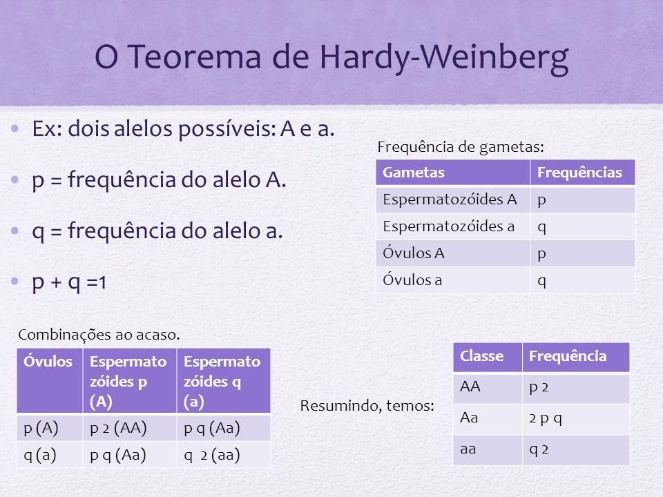 O Teorema de Hardy-Weinberg Ex: dois alelos possíveis: A e a. p = frequência do alelo A. q = frequência do alelo a. p + q =1 GametasFrequências Esperm