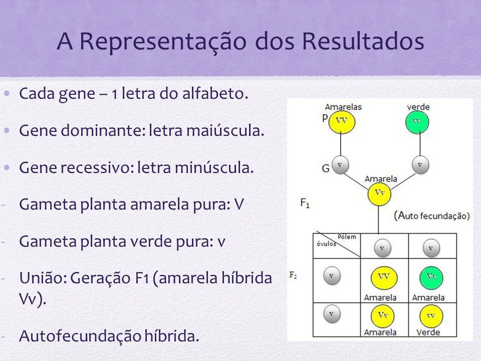 A Representação dos Resultados Cada gene – 1 letra do alfabeto. Gene dominante: letra maiúscula. Gene recessivo: letra minúscula. -Gameta planta amare