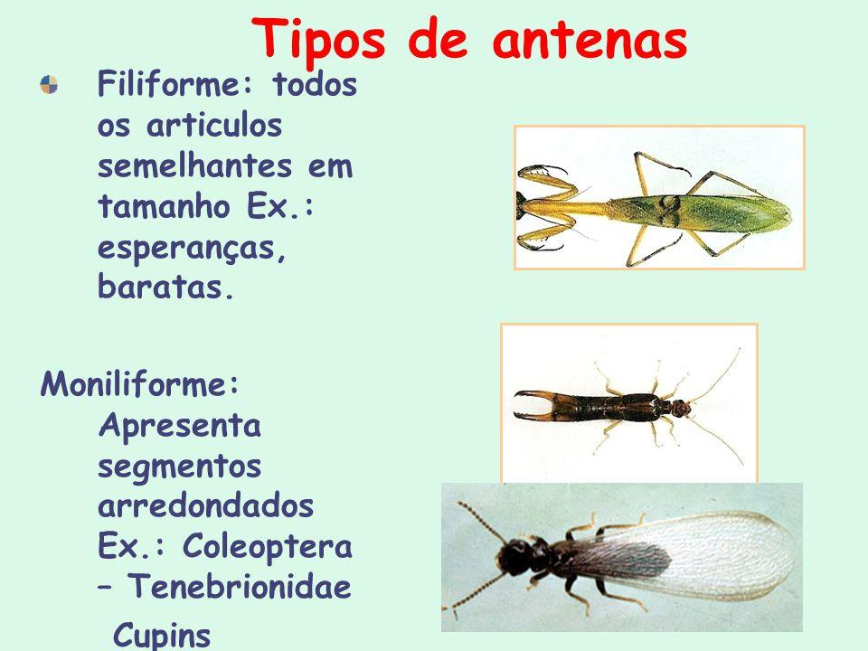 Tipos de antenas Filiforme: todos os articulos semelhantes em tamanho Ex.: esperanças, baratas. Moniliforme: Apresenta segmentos arredondados Ex.: Col