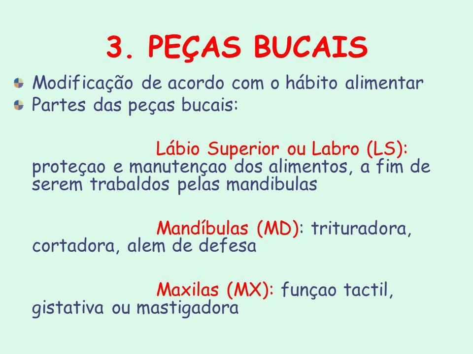 3. PEÇAS BUCAIS Modificação de acordo com o hábito alimentar Partes das peças bucais: Lábio Superior ou Labro (LS): proteçao e manutençao dos alimento