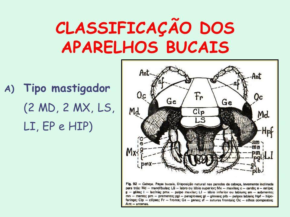 CLASSIFICAÇÃO DOS APARELHOS BUCAIS A) Tipo mastigador (2 MD, 2 MX, LS, LI, EP e HIP)