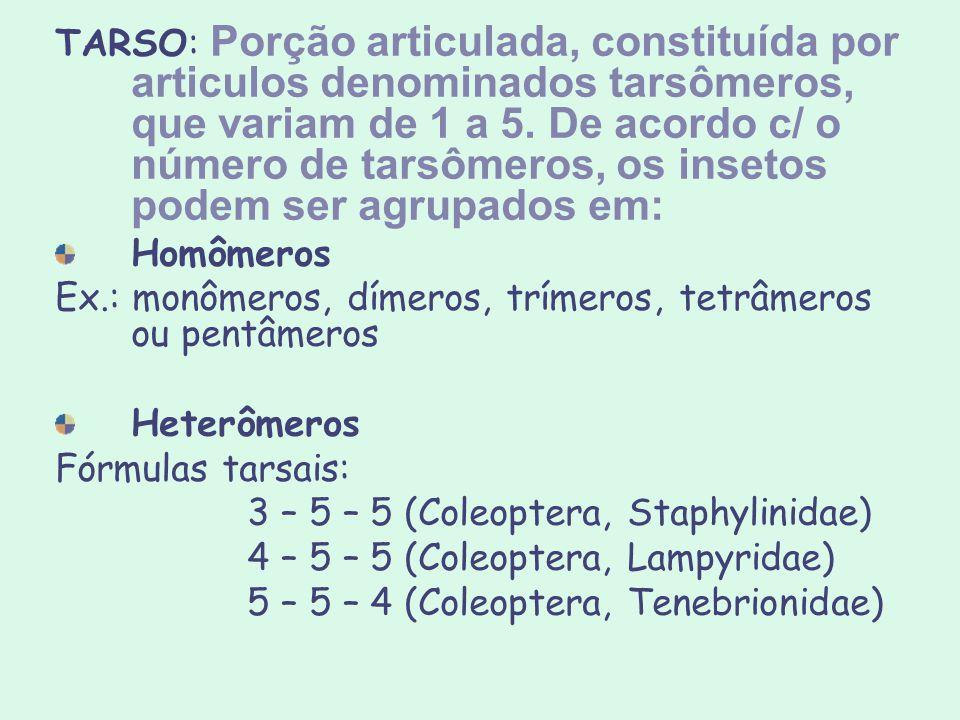 TARSO: Porção articulada, constituída por articulos denominados tarsômeros, que variam de 1 a 5. De acordo c/ o número de tarsômeros, os insetos podem