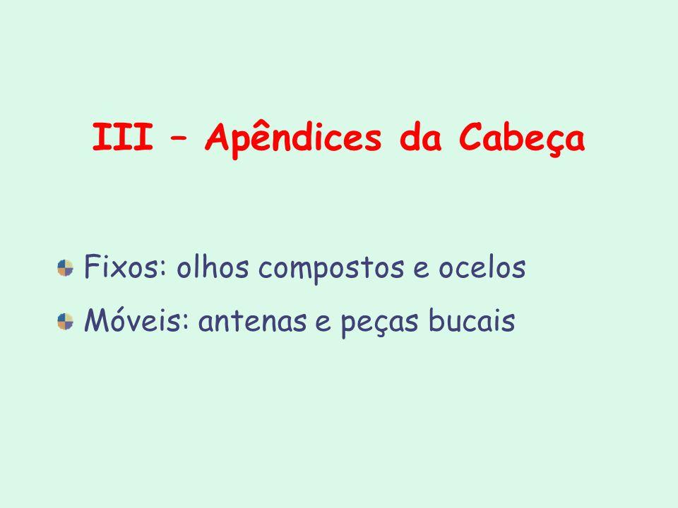 III – Apêndices da Cabeça Fixos: olhos compostos e ocelos Móveis: antenas e peças bucais