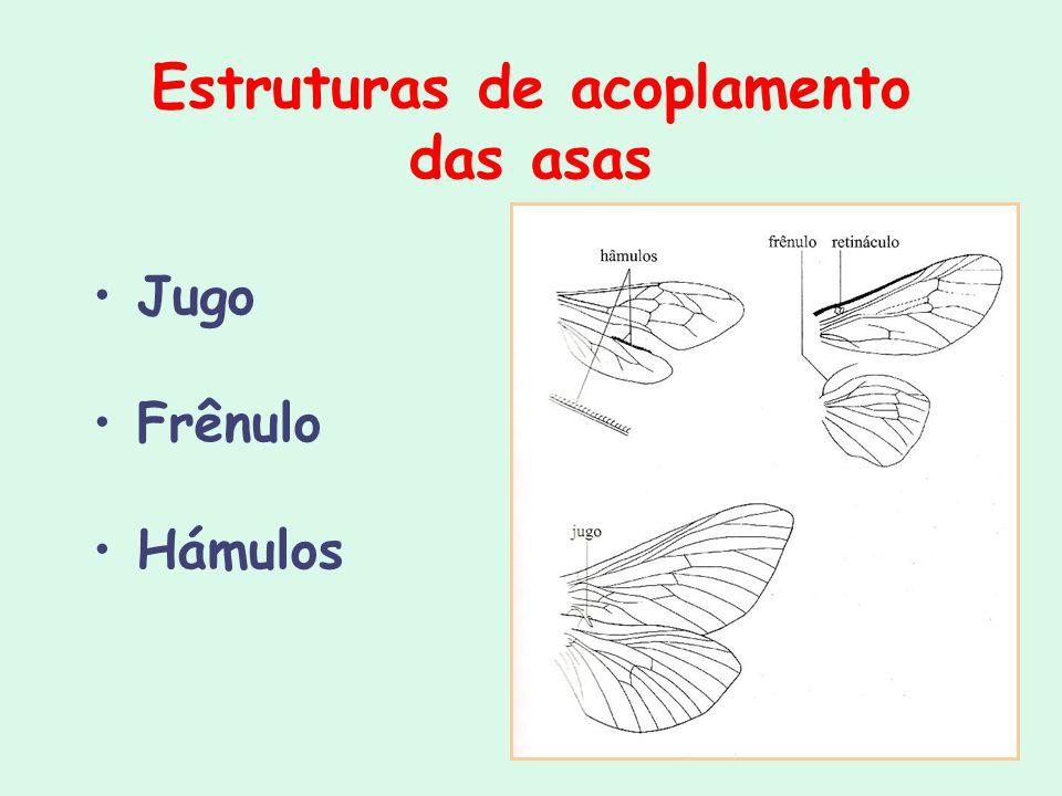 Estruturas de acoplamento das asas Jugo Frênulo Hámulos
