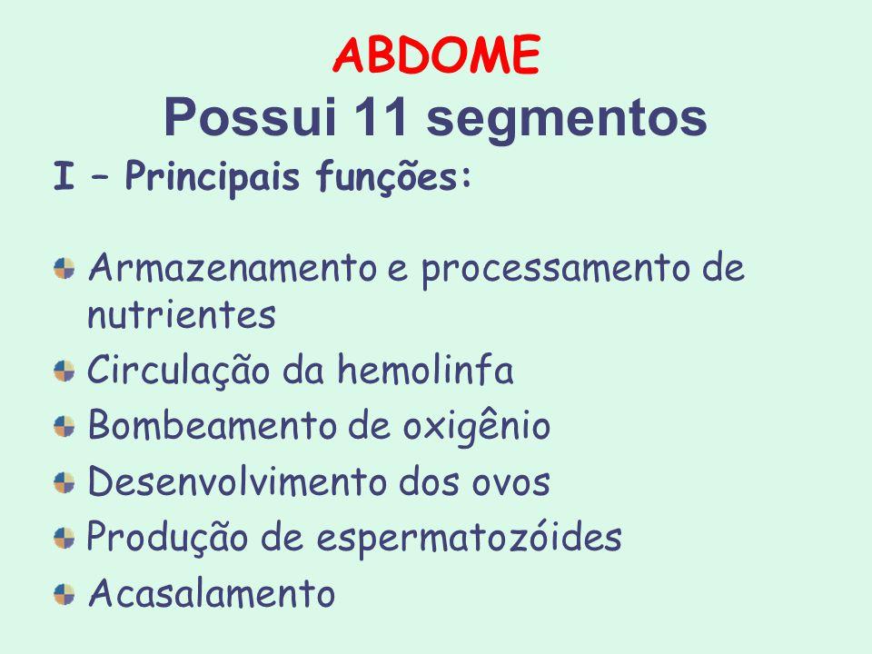 ABDOME Possui 11 segmentos I – Principais funções: Armazenamento e processamento de nutrientes Circulação da hemolinfa Bombeamento de oxigênio Desenvo