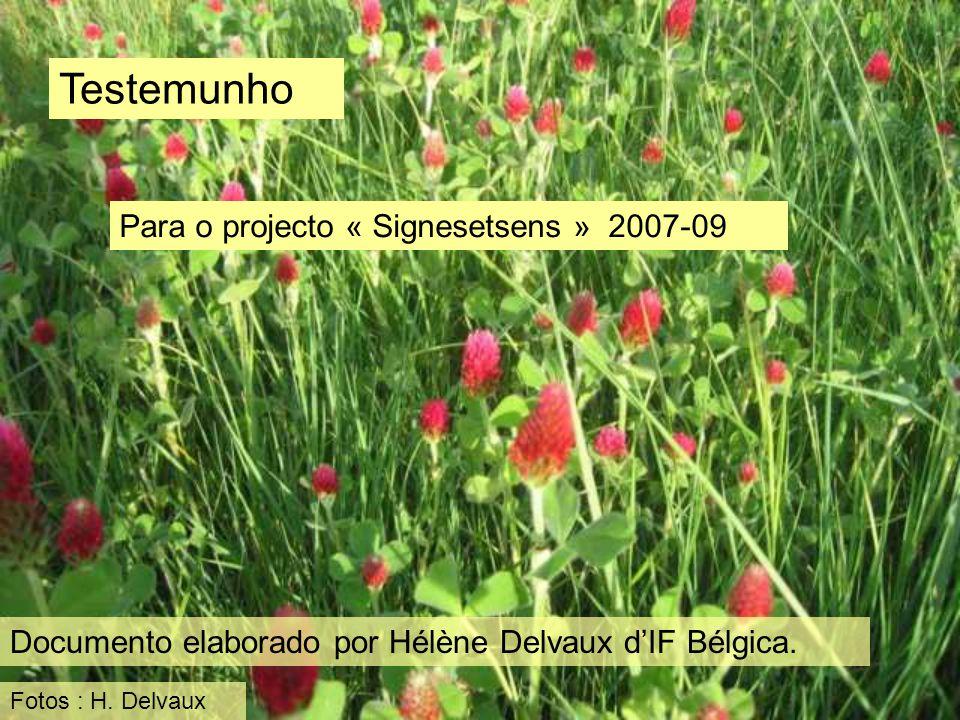 Testemunho Para o projecto « Signesetsens » 2007-09 Documento elaborado por Hélène Delvaux dIF Bélgica. Fotos : H. Delvaux