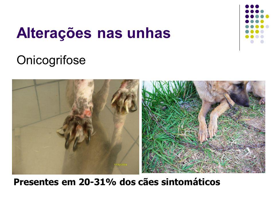 Alterações nas unhas Onicogrifose Presentes em 20-31% dos cães sintomáticos