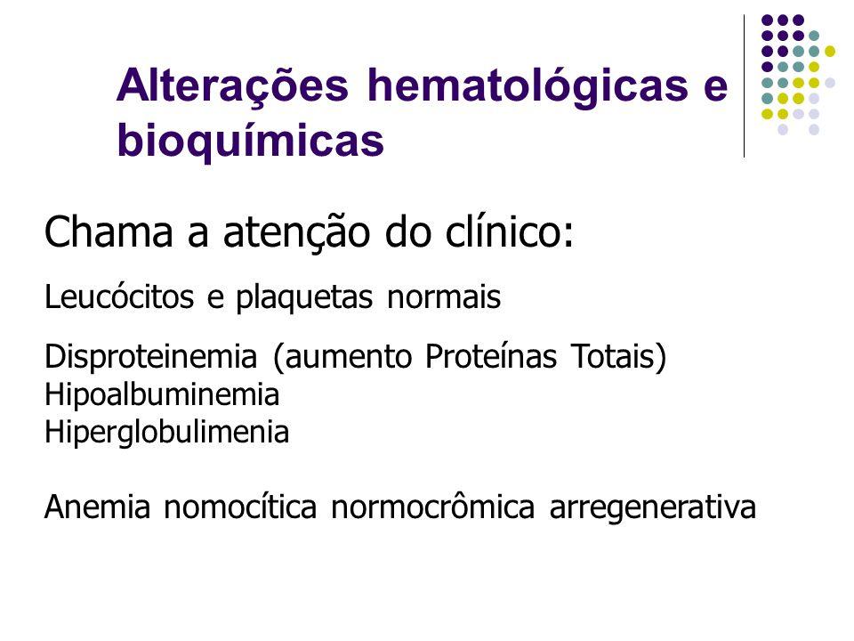 Alterações hematológicas e bioquímicas Chama a atenção do clínico: Leucócitos e plaquetas normais Disproteinemia (aumento Proteínas Totais) Hipoalbumi