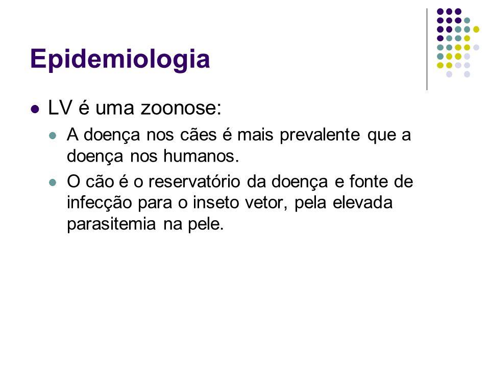 Epidemiologia LV é uma zoonose: A doença nos cães é mais prevalente que a doença nos humanos. O cão é o reservatório da doença e fonte de infecção par