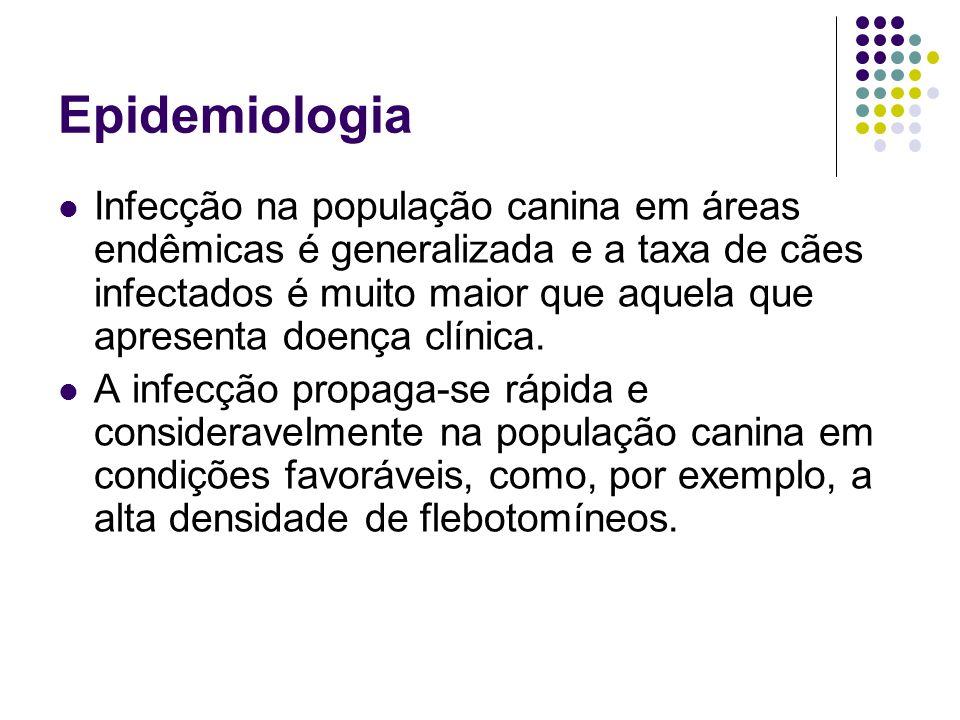 Epidemiologia Infecção na população canina em áreas endêmicas é generalizada e a taxa de cães infectados é muito maior que aquela que apresenta doença