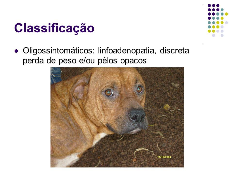 Epidemiologia LV é uma zoonose: A doença nos cães é mais prevalente que a doença nos humanos.
