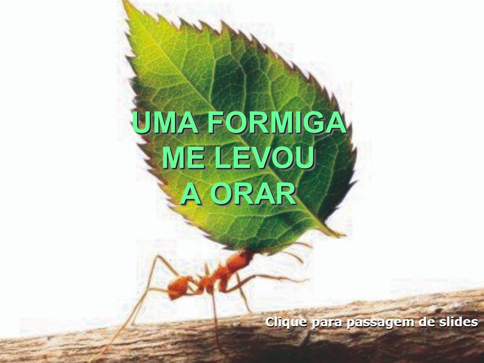 Que me desse a tenacidade daquela formiga, para carregar as dificuldades do dia-a-dia.