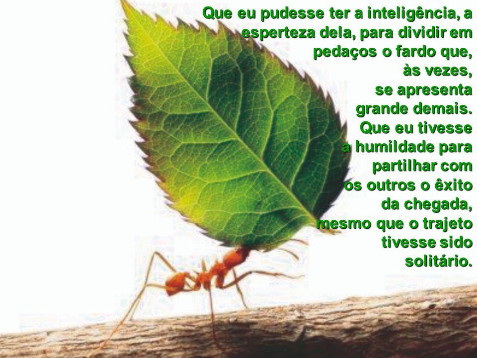 Que me desse a tenacidade daquela formiga, para carregar as dificuldades do dia-a-dia. Que me desse a perseverança da formiga, para não desanimar dian