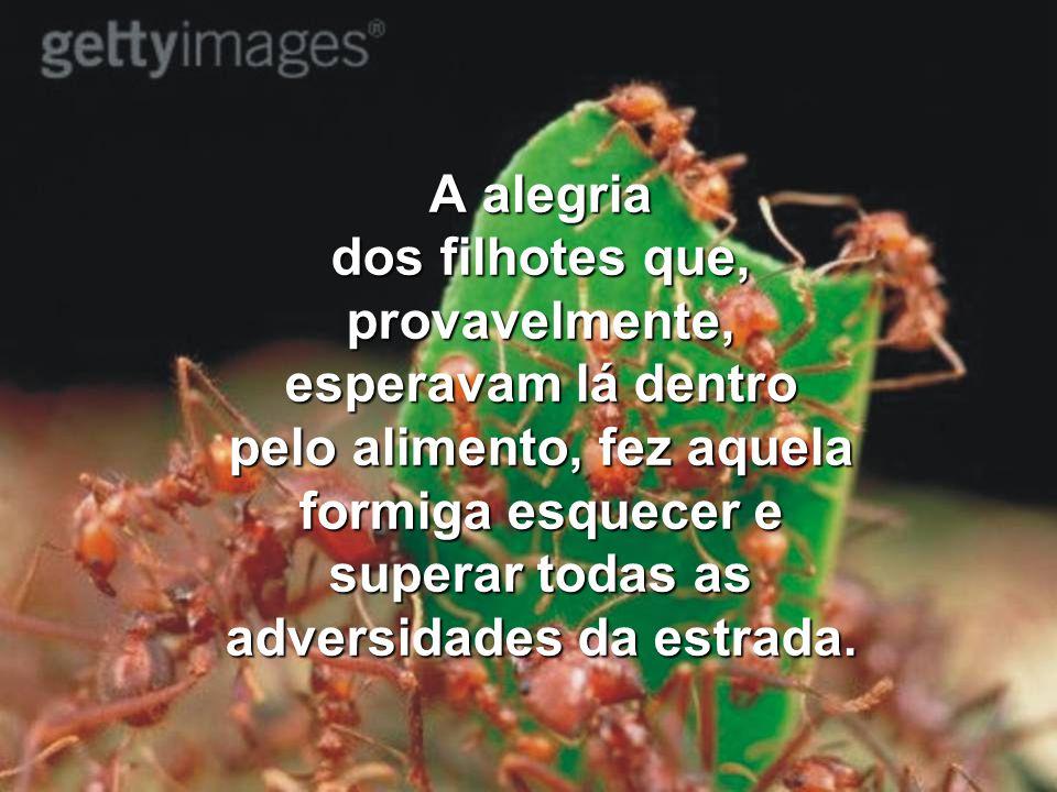 Pedi ao Senhor a graça de, como aquela formiga, não desistir da caminhada, mesmo quando os ventos contrários me fazem virar de cabeça para baixo, mesm