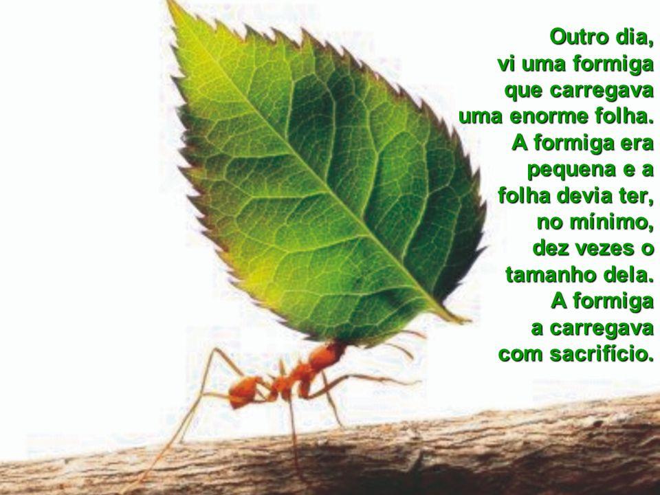 Outro dia, vi uma formiga que carregava uma enorme folha.