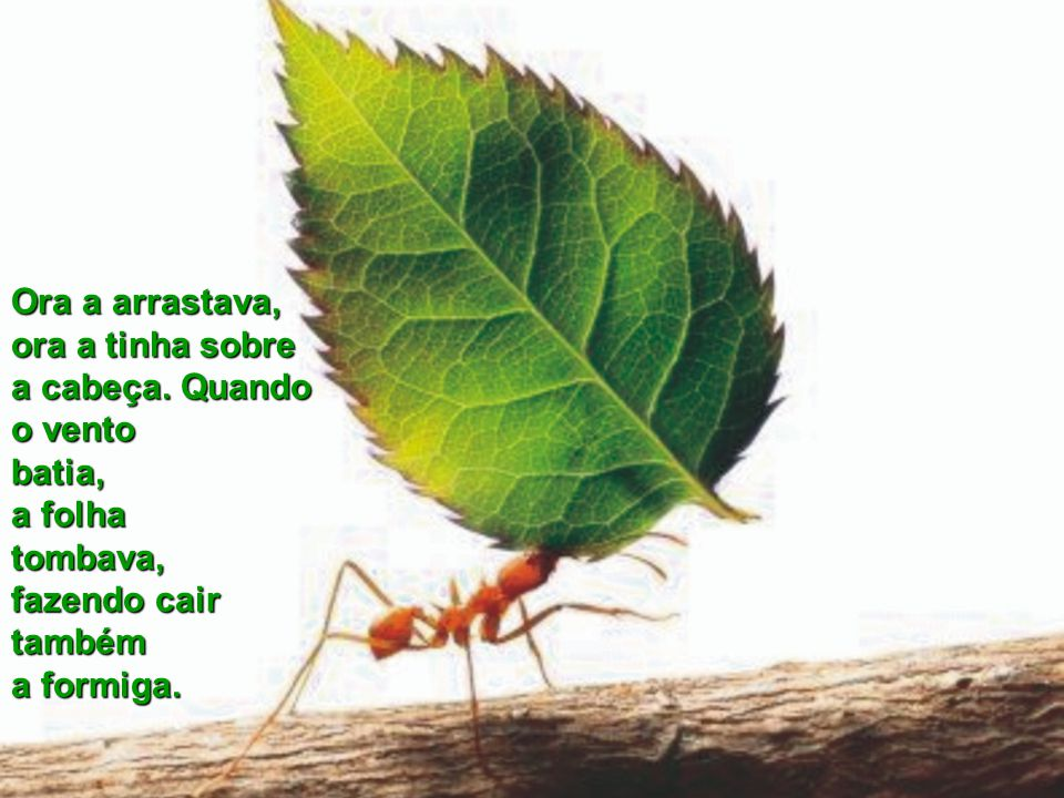 Outro dia, vi uma formiga que carregava uma enorme folha. A formiga era pequena e a folha devia ter, no mínimo, dez vezes o tamanho dela. A formiga a