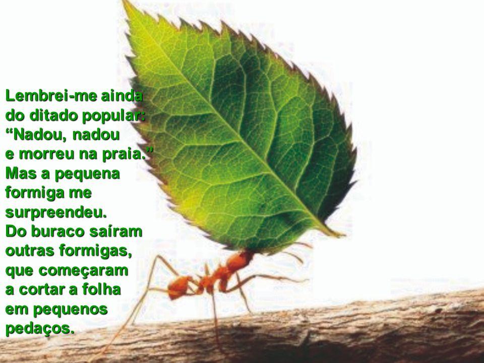 A folha era muito maior do que a boca do buraco, o que fez com que a formiga a deixasse do lado de fora para, então, entrar sozinha. Foi aí que disse