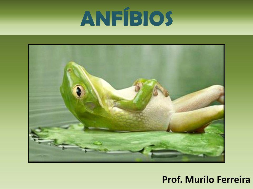 ANFÍBIOS Prof. Murilo Ferreira
