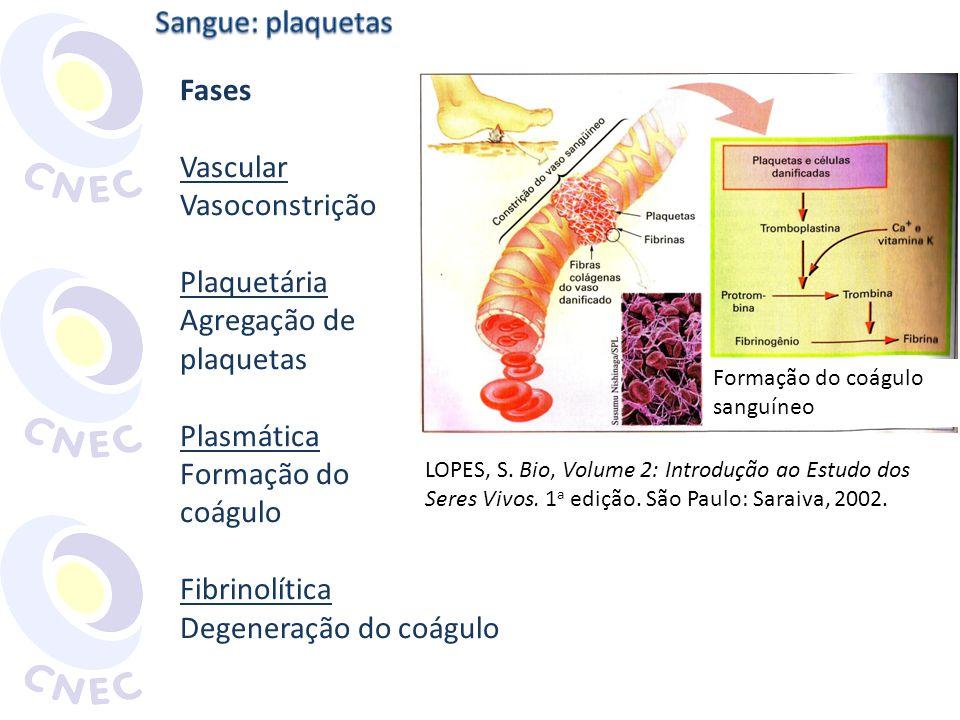 Fases Vascular Vasoconstrição Plaquetária Agregação de plaquetas Plasmática Formação do coágulo Fibrinolítica Degeneração do coágulo Formação do coágu