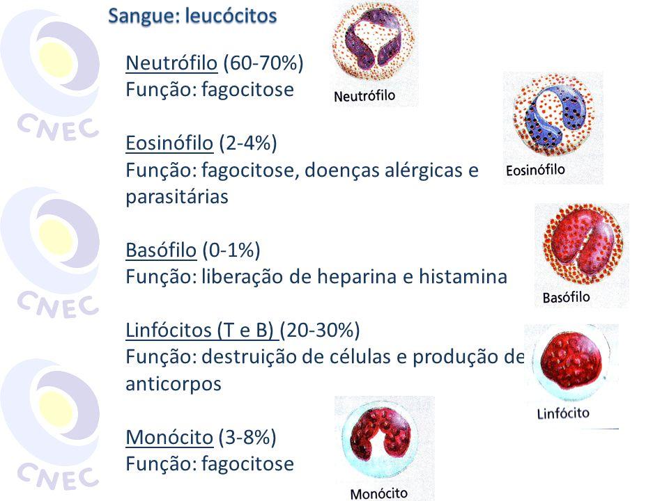 Neutrófilo (60-70%) Função: fagocitose Eosinófilo (2-4%) Função: fagocitose, doenças alérgicas e parasitárias Basófilo (0-1%) Função: liberação de hep