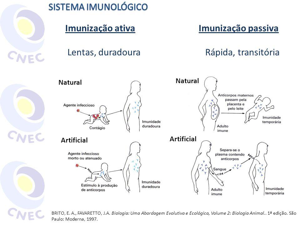 Imunização ativa Imunização passiva Lentas, duradoura Rápida, transitória BRITO, E. A., FAVARETTO, J.A. Biologia: Uma Abordagem Evolutiva e Ecológica,