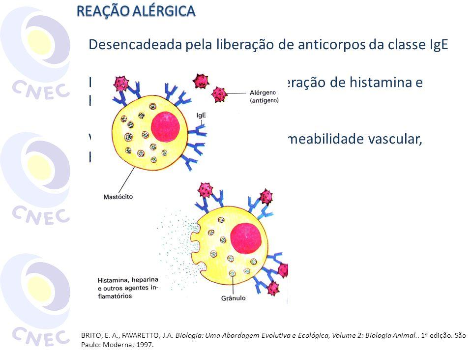 Desencadeada pela liberação de anticorpos da classe IgE Reação antígeno-anticorpo: liberação de histamina e heparina Vasodilatação, aumento da permeab