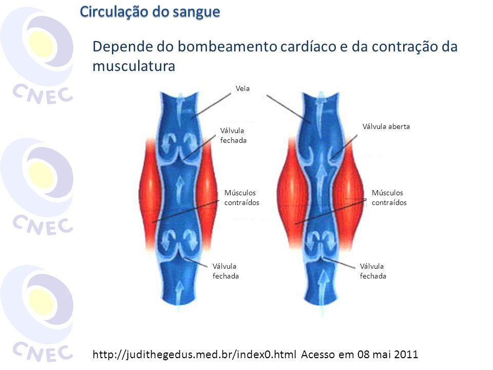 Depende do bombeamento cardíaco e da contração da musculatura http://judithegedus.med.br/index0.html Acesso em 08 mai 2011 Músculos contraídos Válvula