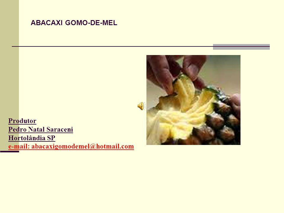 Produtor Pedro Natal Saraceni Hortolândia SP e-mail: abacaxigomodemel@hotmail.com ABACAXI GOMO-DE-MEL