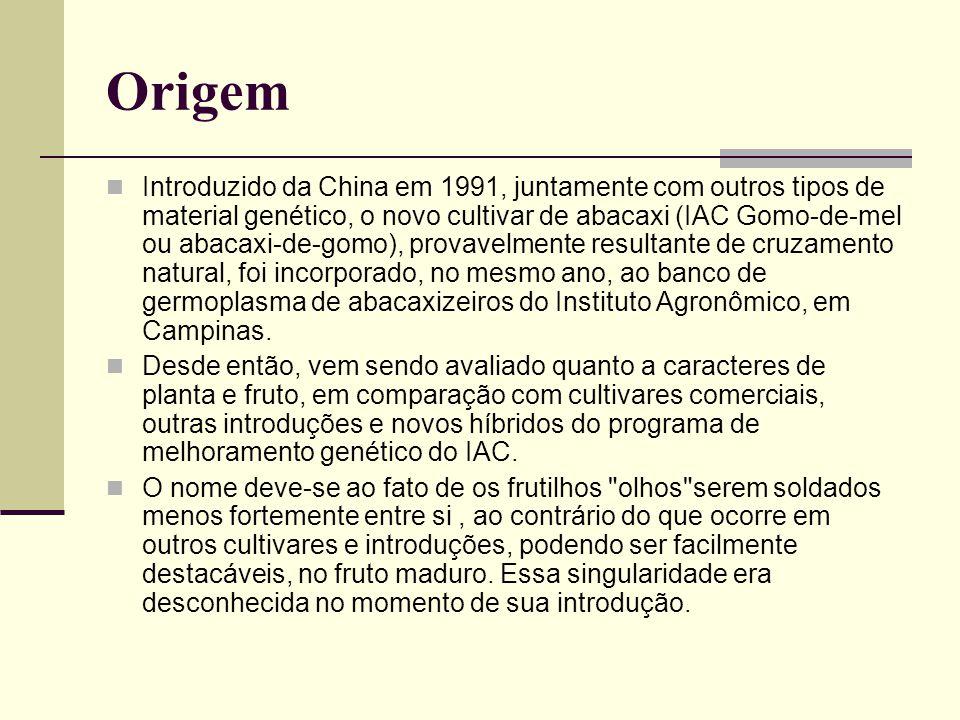 Origem Introduzido da China em 1991, juntamente com outros tipos de material genético, o novo cultivar de abacaxi (IAC Gomo-de-mel ou abacaxi-de-gomo)