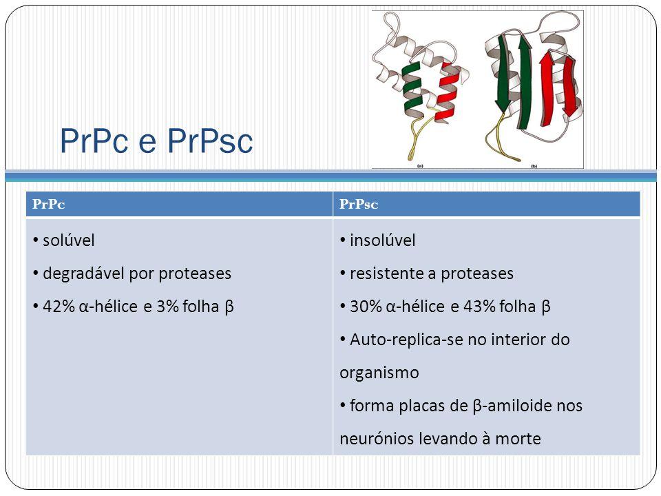 PrPc e PrPsc PrPcPrPsc solúvel degradável por proteases 42% α-hélice e 3% folha β insolúvel resistente a proteases 30% α-hélice e 43% folha β Auto-replica-se no interior do organismo forma placas de β-amiloide nos neurónios levando à morte