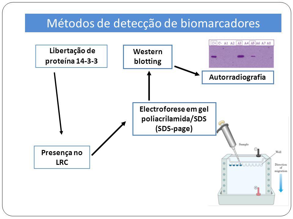 Libertação de proteína 14-3-3 Presença no LRC Western blotting Electroforese em gel poliacrilamida/SDS (SDS-page) Autorradiografia Métodos de detecção de biomarcadores