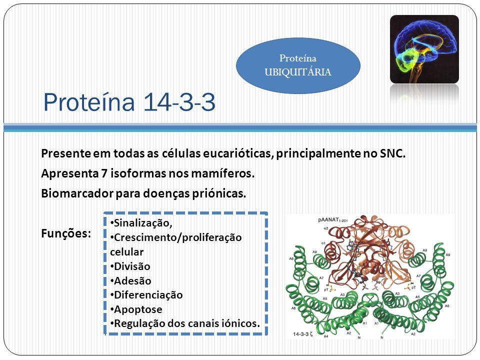 Proteína 14-3-3 Presente em todas as células eucarióticas, principalmente no SNC.